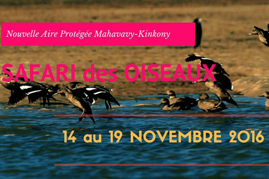Safari des oiseaux 2016: 14 – 19 novembre 2016